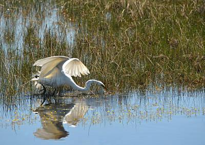Photograph - Graceful Great Egret by Carla Parris