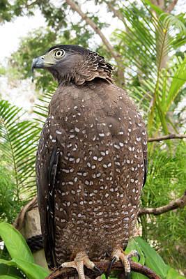Impressionist Landscapes - Graceful hawk, Bird of prey by Nunta Lertslarak