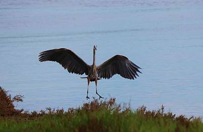 Photograph - Graceful Landing  by Christy Pooschke