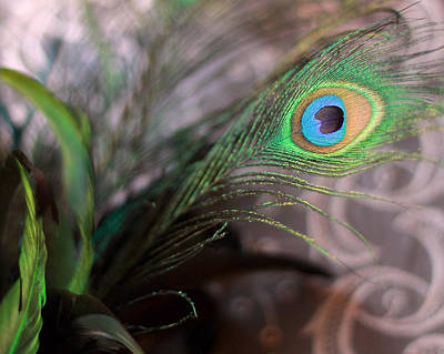 Photograph - Graceful Peacock Feather by Angela Murdock