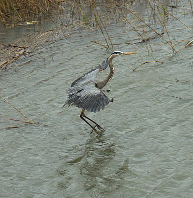 Photograph - Graceful Tip Toe 1 by Suanne Forster