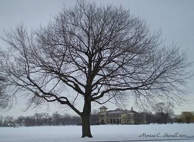 Graceful Tree And Belle Isle Eating Casino In Distance Art Print