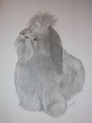 Shih Tzu Drawing - Gracie by Kristen Hurley