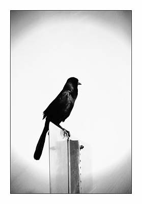 Photograph - Grackle On A Sign Post by Carolyn Marshall