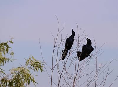 Photograph - Grackle Pair by Warren Thompson