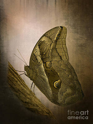 Photograph - Graffic Owl Butterfly by Inge Riis McDonald