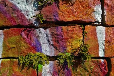 Photograph - Graffiti And Ferns 2 by Cheryl Hoyle