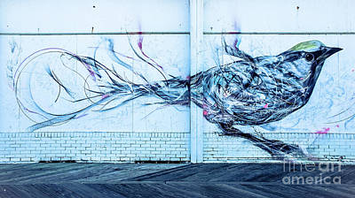 Photograph - Graffiti Bird by Colleen Kammerer