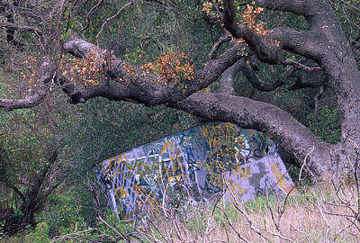 Coast Hwy Ca Photograph - Graffiti by Soli Deo Gloria Wilderness And Wildlife Photography