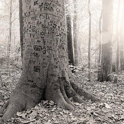 Graffiti Tree Art Print by Jon Woodhams