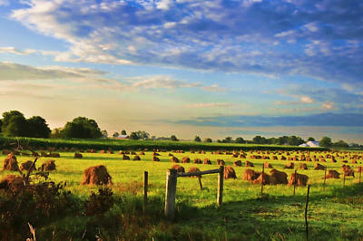Amish Photograph - Grain In The Field by David Arment
