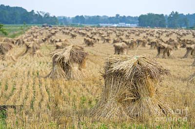 Amish Photograph - Grain Shocks by David Arment