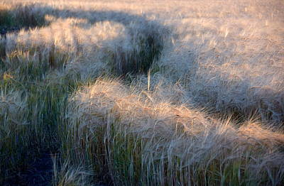 Winter Animals - Grain with Shadow and Light by Gregory Strong