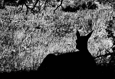 Photograph - Grand Canyon   # 24 - Resting Elk by Allen Beatty