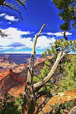 Photograph - Grand Canyon # 31 - Duck On A Rock Viewpoint by Allen Beatty