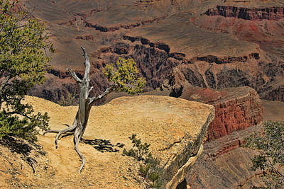 Photograph - Grand Canyon   # 42 - Powell Point by Allen Beatty