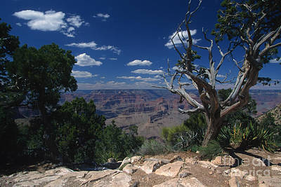 Photograph - Grand Canyon 1 by Stan and Anne Foster