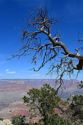 Photograph - Grand Canyon 3 by Aimee L Maher ALM GALLERY