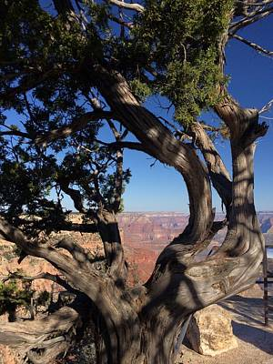 Photograph - Grand Canyon No. 6 by Sandy Taylor