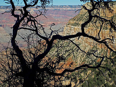Photograph - Grand Canyon 8 by Steve Breslow