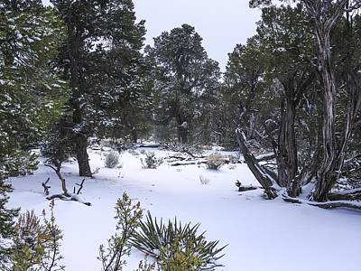 Photograph - Grand Canyon After Winter Snowstorm by NaturesPix