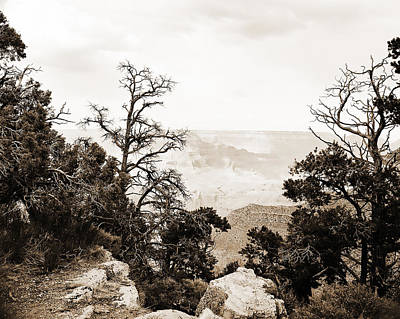Photograph - Grand Canyon Arizona Fine Art Photograph In Sepia 3528.01 by M K Miller