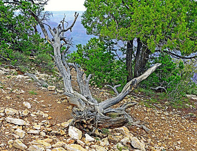 Photograph - Grand Canyon Deadwood Study 2 by Robert Meyers-Lussier