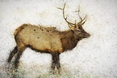 Photograph - Grand Canyon Elk No. 1 Wintered by Belinda Greb