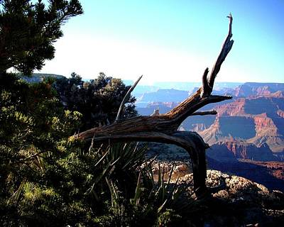 Photograph - Grand Canyon Fallen Tree View by Matt Harang