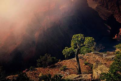 Grand Canyon Juniper Art Print