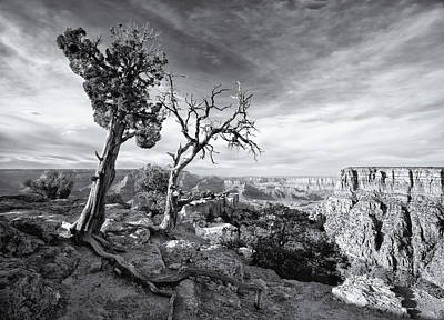 Unicorn Dust - Grand Canyon - Monochrome by Darren White