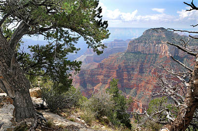 Photograph - Grand Canyon North Rim - Through The Trees by Victoria Oldham