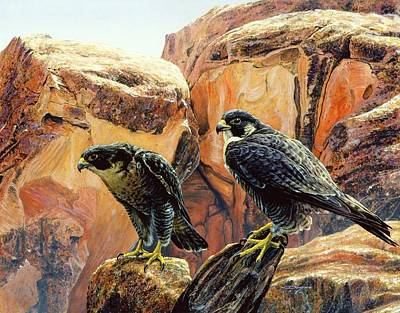 Painting - Grand Canyon Peregrine Falcons by Brian Durfee