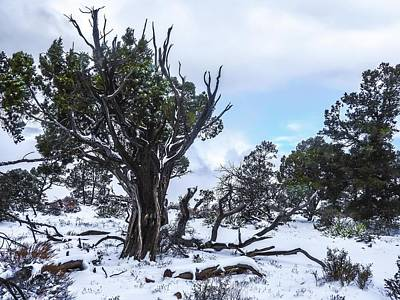 Photograph - Grand Canyon South Rim After Winter Snowstorm by NaturesPix