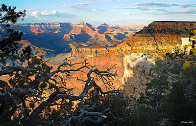 Photograph - Grand Canyon South Rim - Sunset Through Trees by Victoria Oldham