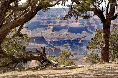 Grand Canyon Through The Trees Print by Jane Rix