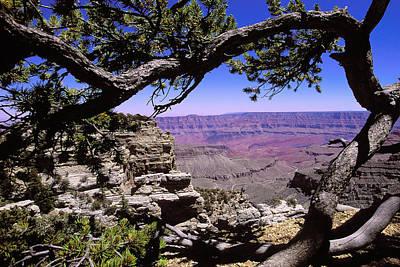 Grand Canyon Thru Pine Original