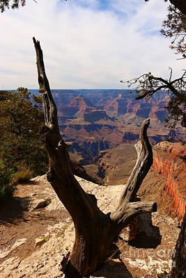 Grand Canyon View Through Dead Tree  Art Print by Christiane Schulze Art And Photography