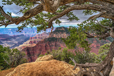 Photograph - Grand Canyon With Pine Tree 7r2_dsc1706_0813201 by Greg Kluempers