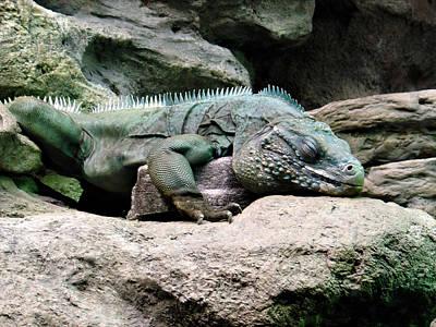 Endangered Mixed Media - Grand Cayman Blue Iguana by Angelina Vick