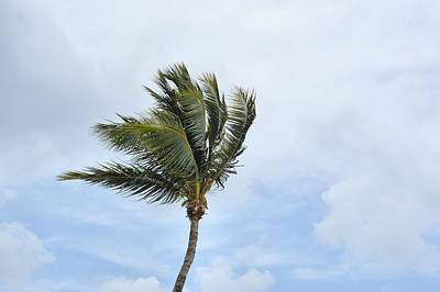 Photograph - Grand Cayman Breezes by JAMART Photography