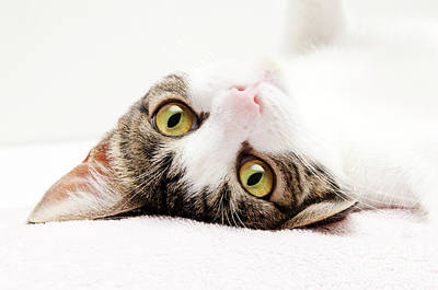 Andee Design Kitties Photograph - Grand Kitty Cuteness by Andee Design