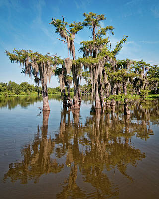 Photograph - Grand Lake Cypress Trees by Andy Crawford