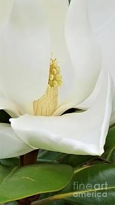 Photograph - Grand Magnolia by Daun Soden-Greene
