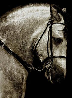 Paso Fino Stallion Photograph - Grand Man by Debra Raskin