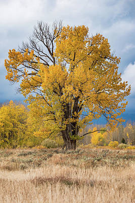 Photograph - Grand Old Tree by Chuck Jason