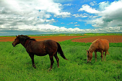 Photograph - Grand-pre Horses by Gary Corbett