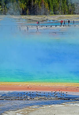 Photograph - Grand Prismatic Spring For The Birds by Bruce Gourley
