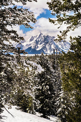 Photograph - Grand Teton Through The Pines by TL Mair