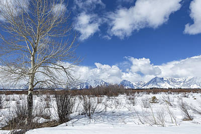 Photograph - Grand Tetons From Willow Flats With A Tree by Belinda Greb